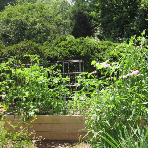 Planning and Designing your Raised Bed Garden - 1818 Farms