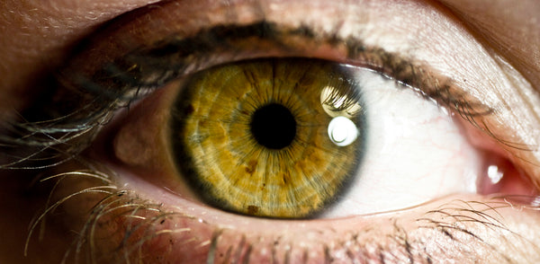Iridology Assessment I (Initial)