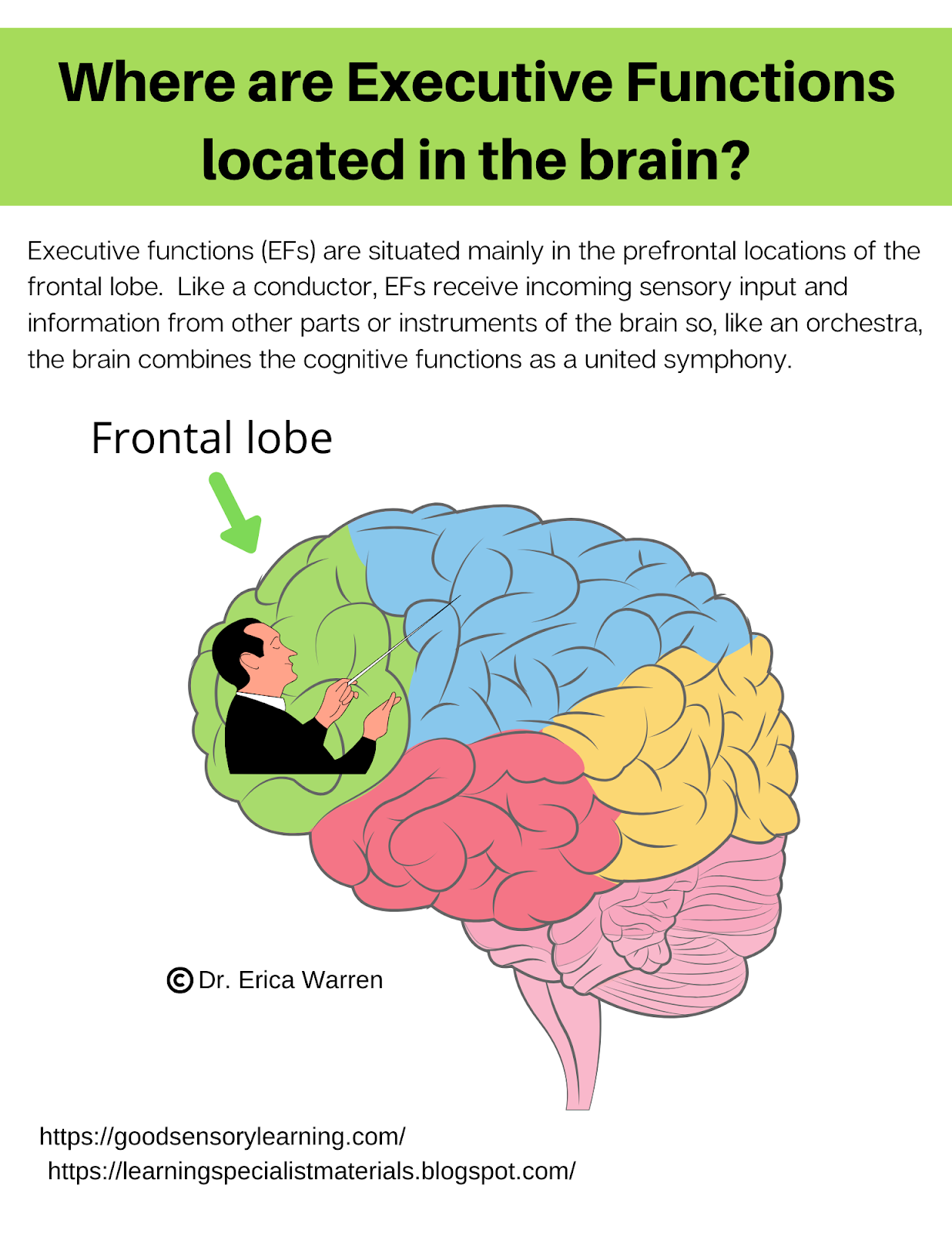 Colorful brain shows where executive functioning is located in the prefrontal cortex