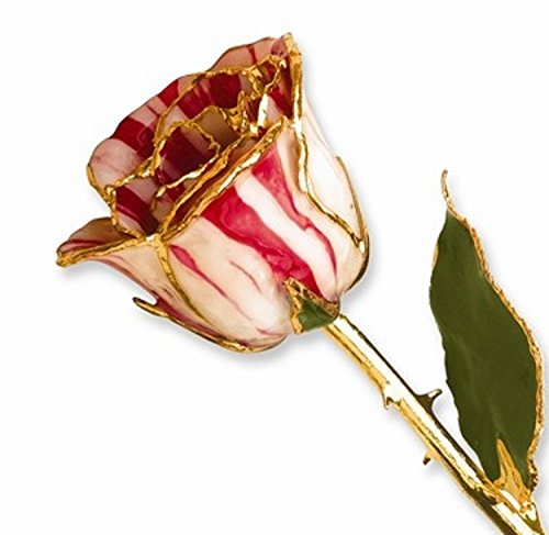Forever® Rose 24K Gold Trimmed Peppermint Striped Rose - Roxx Fine Jewelry