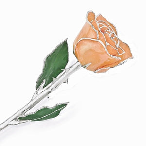 Forever® Rose Silver Trimmed Orange Sherbet Rose - Roxx Fine Jewelry