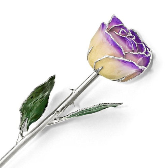 Forever® Rose Lilac and Cream Rose Trimmed in Sterling Silver - Roxx Fine Jewelry