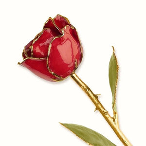 Forever® Rose 24K Gold Trimmed Ruby Sun Red Rose - Roxx Fine Jewelry