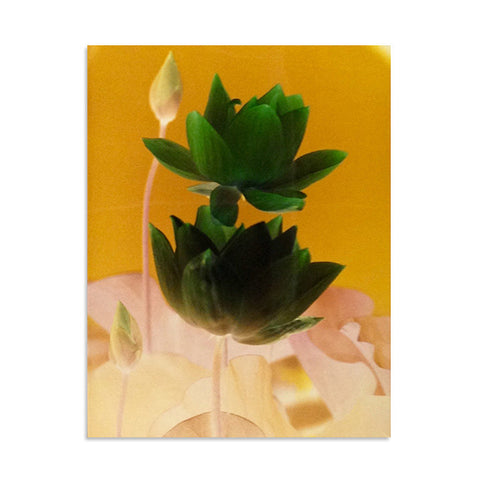 Past Project Flatfiles - Photograph of Lotus flowers