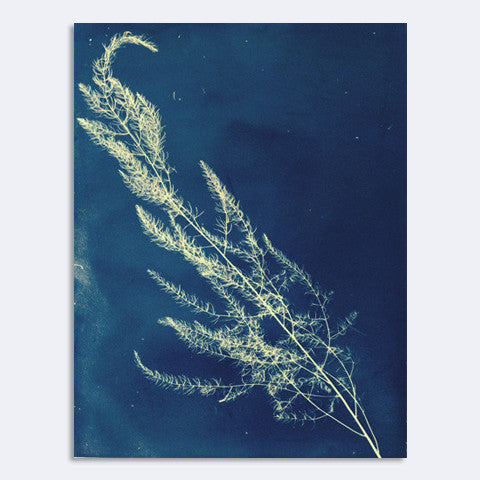Andrea Belag - Photogram 2