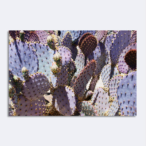 Murray Bolesta - Mess o' Cactus #2