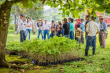 One Tree Planted - A non-profit organization focused on global reforestation