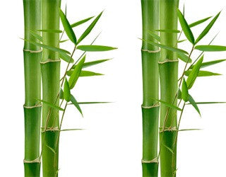 Don't Get Bamboo-zled