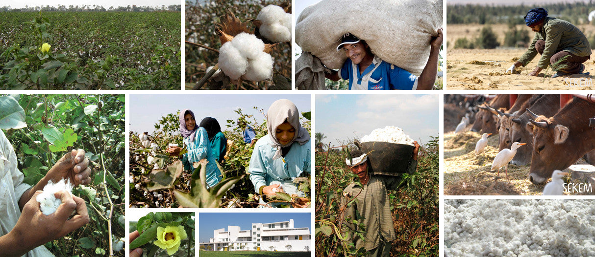 Photos of our sustainable cotton production