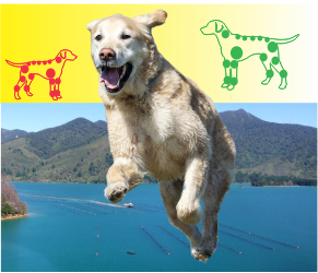 best dog joint health care for limping dogs nz