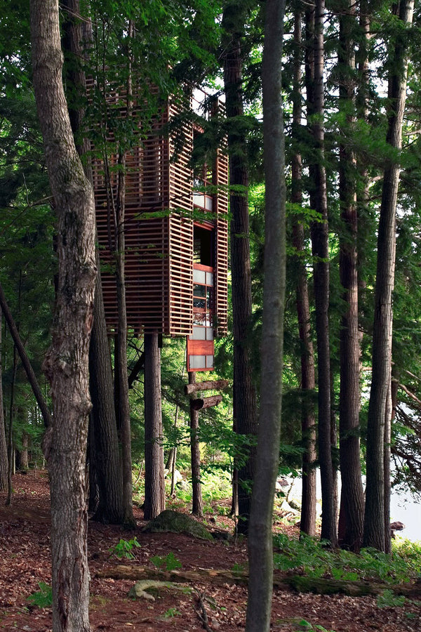 Some Epic Tree Houses
