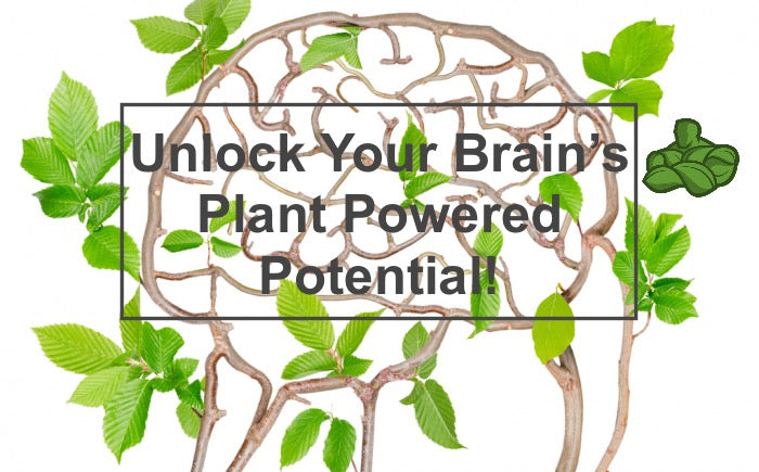 Unlock Your Brain's Plant Powered Potential!