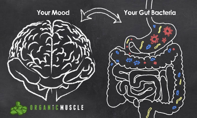 Probiotics: Bacteria That Effect The Way We Think & Feel