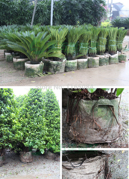 60*50 Non-woven Planting Bag Home Gardening Vegetable Grow Bags trees Flower Pot ,  - JKK Mart, JKK Mart - 2