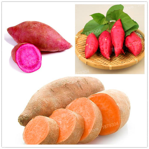 100pcs/bag sweet potato Vegetables Seeds fresh food Fruit And Garden Supplies bo