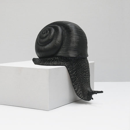 Shelf Snail - Black