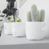Face Planter (Set) - White