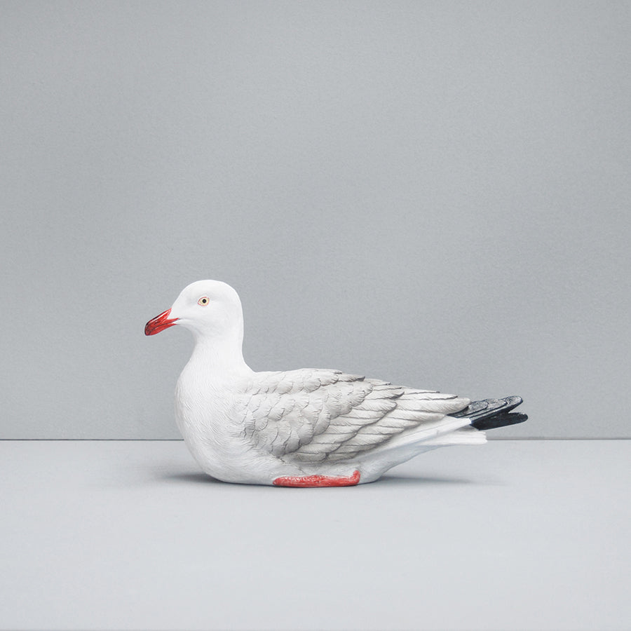 Seagull - Natural
