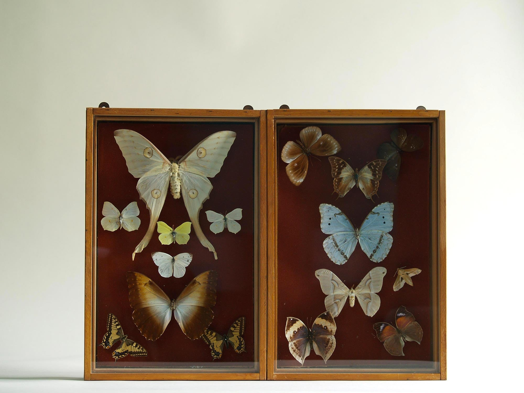 Paire de coffrets entomologiques, France (Vers 1930)..Set of two Curiosa Butterflies boxes, France (Circa 1930)