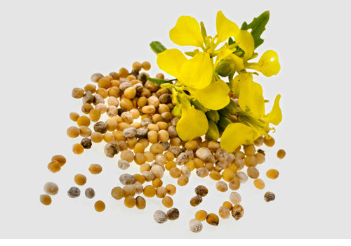 Vivia Crumps mustard seeds in Lemon and Mustard Seed Relish