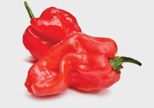 Scotch Bonnet Chillis