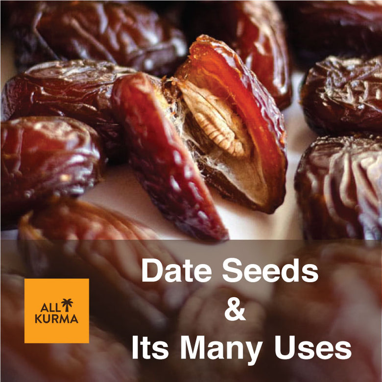 Date Seeds, Uses of Date Seeds, Pitted Date Seeds, Benefits of Dates, All Kurma Singapore