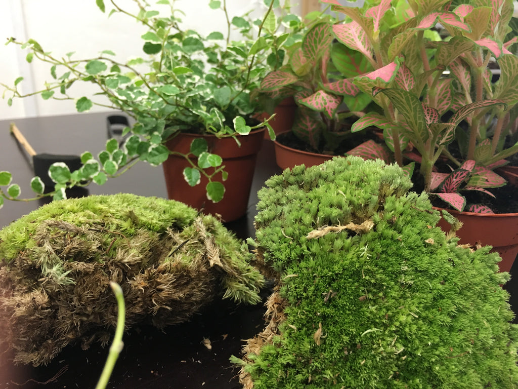 Tinyjohn Terrarium Workshop with London Terrariums at Hato Press: Sunday 28 May 12.00 — 14.00