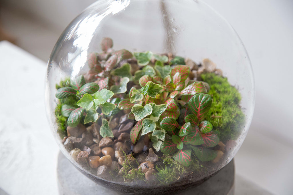 Boiling Flask Terrarium Workshop with London Terrariums at Hato Press: Saturday 4th March 12.00 — 14.00
