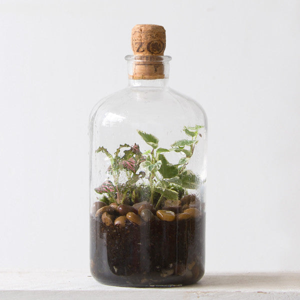 Tinyjohn Terrarium Workshop with London Terrariums at Hato Press: Sunday 19th March 12.00 — 14.00