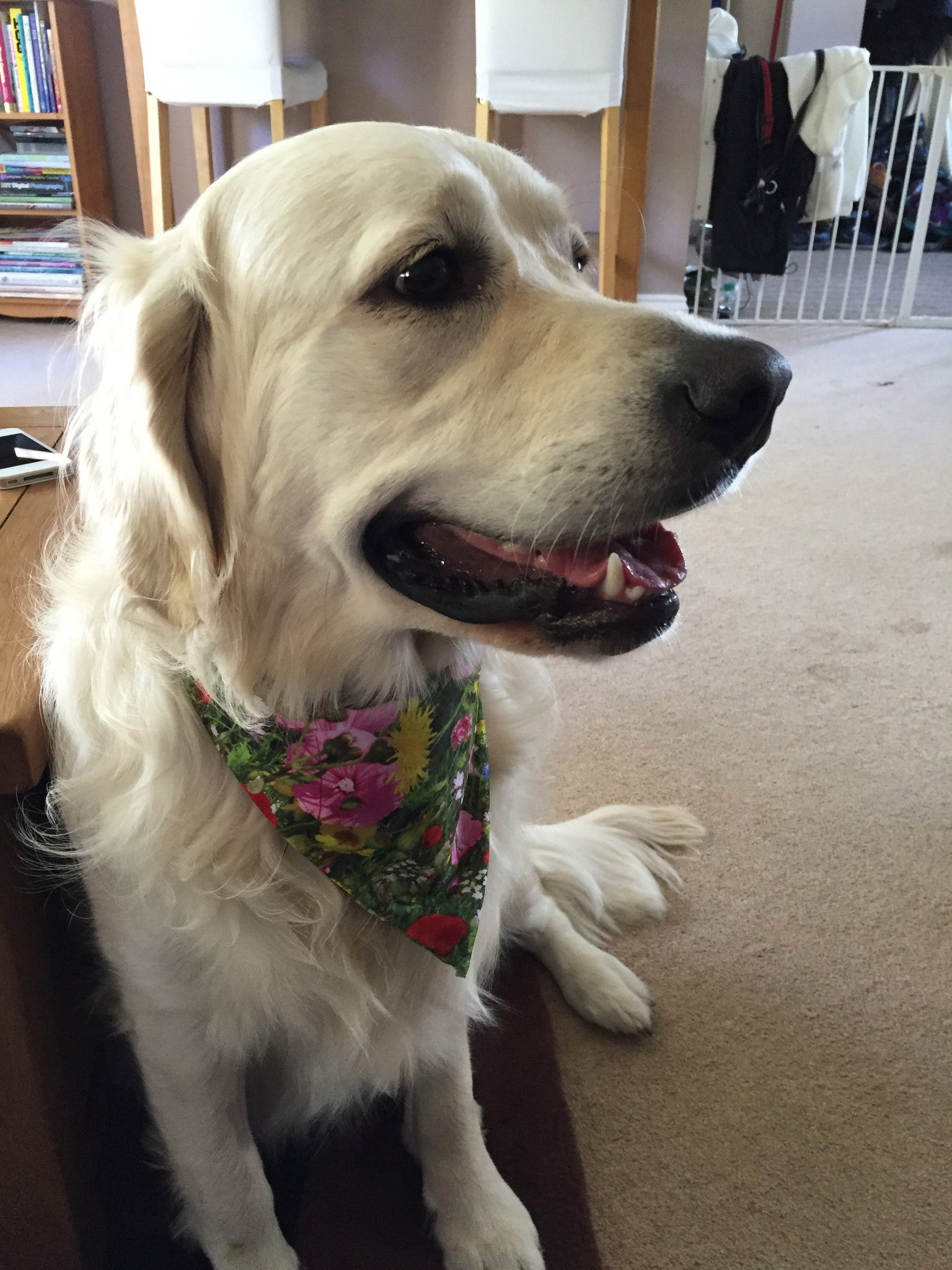 Doggy Bandanas (Meadows)
