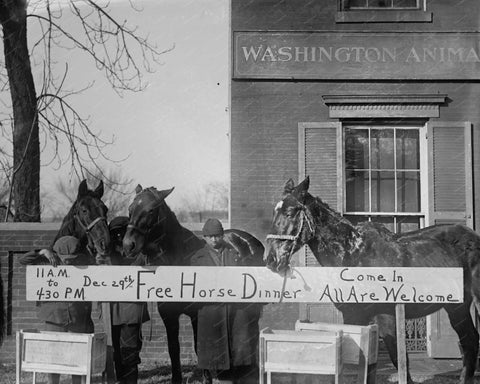 Free Horse Dinner All Welcome 1923 8x10 Reprint Of Old Photo - Photoseeum