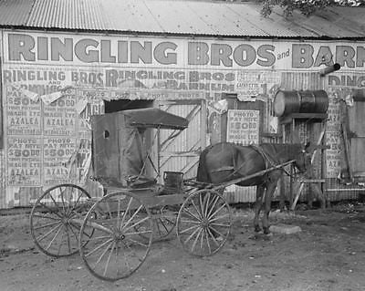 Ringling Bros Barn 1938 Vintage 8x10 Reprint Of Old Photo