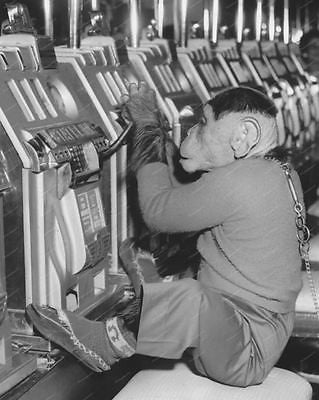Monkey Plays Slot Machine Vintage 8x10 Reprint Of Old Photo - Photoseeum