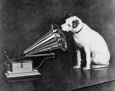 RCA Victor Dog Mascot Print 8x10 Reprint Of Old Photo