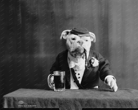 Bull Dog Bartender 1905 8x10 Reprint Of Old Photo