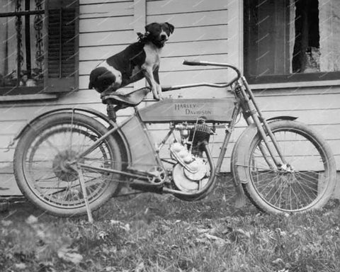 Dog Sitting On A Harley Davidson Motorcycle Vintage 8x10 Reprint Of Old Photo - Photoseeum