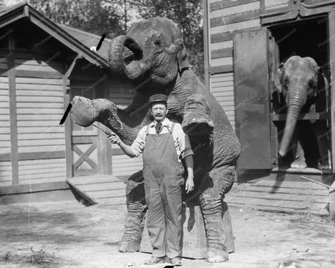 Bill Snyder &  Elephant Hattie Standing! 8x10 Reprint Of Old Photo