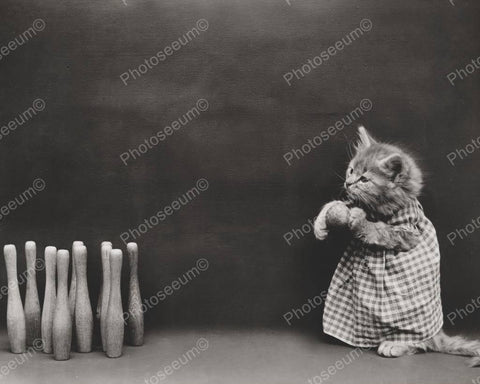 Cat Bowling 1914  8x10 Reprint Of Old Photo