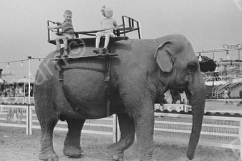 Children Ride Elephant At The Circus 4x6 Reprint Of Old Photo