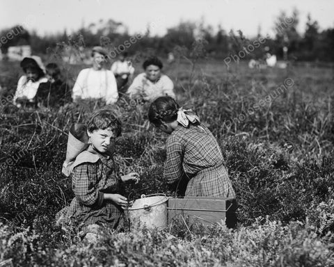 Berry Picker Girl Sports Sour Face 8x10 Reprint Of Old Photo - Photoseeum