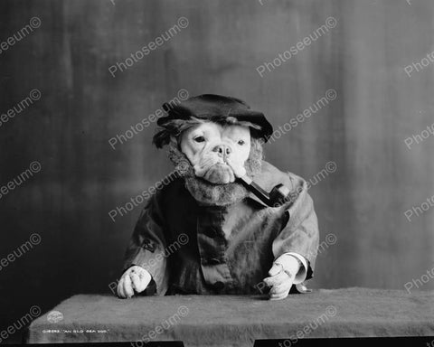 Dog Smoking Pipe 1905 Vintage 8x10 Reprint Of Old Photo