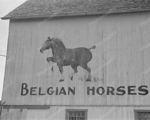 Barn Sign Belgian Horses 1938 Vintage 8x10 Reprint Of Old Photo