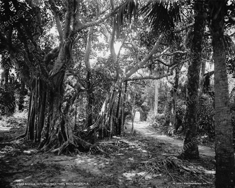 Bicycle Path To Farm In Florida Viintage 8x10 Reprint Of Old Photo