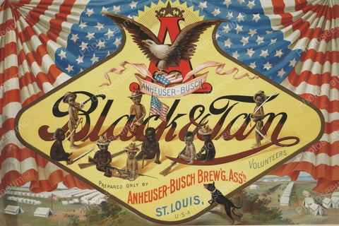 Aunheuser-Busch Black & Tan Beer Label 1899 Vintage 8x12 Reprint Of Old Photo