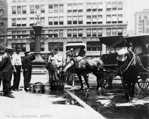 Cab Horses Drink Water From ASPCA 1911 8x10 Reprint Of Old Photo