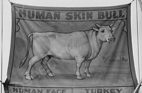 Vermont Sideshow Human Skin Bull 1940s 4x6 Reprint Of Old Photo