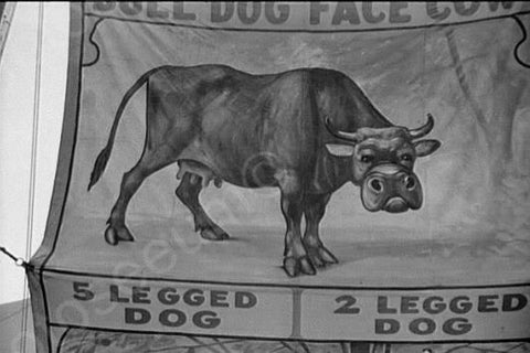 Vermont Sideshow Poster 5 Legged Dog 1940 4x6 Reprint Of Old Photo