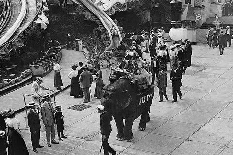 Coney Island Judy The Riding Elephant 4x6 Reprint Of Old Photo - Photoseeum