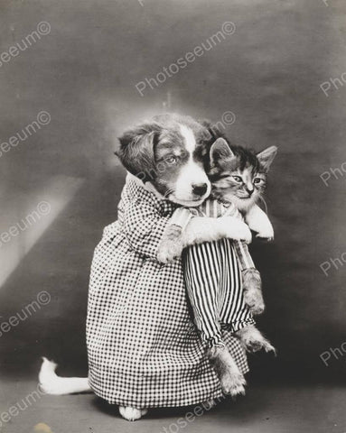 Dog Carrying Kitten To Bed 1914 8x10 Reprint Of Old Photo