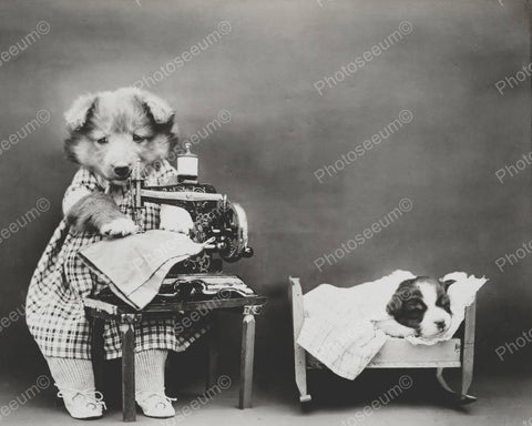 Dog Sewing Pants 8x10 Reprint Of Old Photo